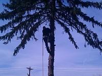 MARINOS TREE SERVICE